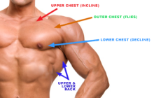 Chest and Back Fitness Routine