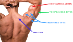 Shoulders and Arms Fitness Routine